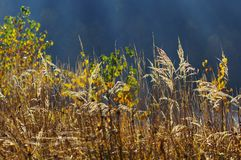 Plants with sunset and sun rays Royalty Free Stock Photo