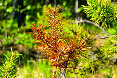 Plants of  taiga. Royalty Free Stock Photography