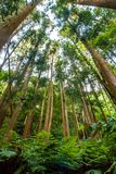 Plants and tall trees in a coniferous forest, bottom-up view stock photography