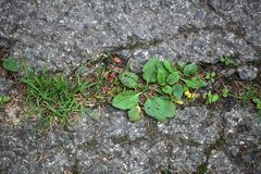 Plants on a tarred road. Stock Photos