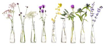 Plants in test tube. In front of white background Stock Photography