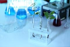 Plants in test tubes on blurred Stock Photos