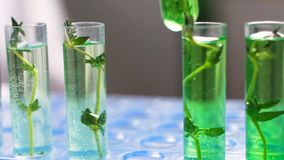 Plants in test tubes on light background.  stock footage