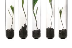 Plants in test tubes. On white background Stock Photos