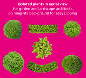 Plants in top view Stock Photos