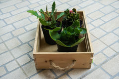 Plants in tray. Small plants in a wooden tray Stock Photos