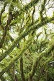 Plants on tree Stock Image
