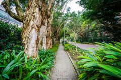 Plants and trees along a walkway at  the National Taiwan Univers Stock Photo