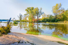 Plants and Trees Close to the River Stock Photography