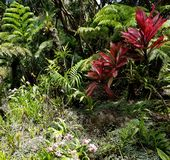 Plants, Trees, and Flowers in the Tropical Rainforest Jungle stock image