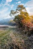 Plants and trees on frosty autumn morning. Lovely rural scenery with cold fog in November Royalty Free Stock Photos