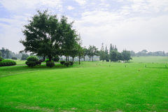 Plants and trees on golf course in sunny autumn. Chengdu,China Royalty Free Stock Photos