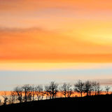 Plants at sunset. Plants and trees in a orange sunset stock photo