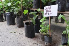 Plants and trees sold at sunday market stock photo