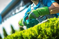 Plants Trimming by Gardener stock photography