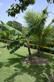 Plants in the tropical area of the Dominican Republic Stock Photos