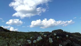 The plants in the tundra. Summer day with clouds stock video