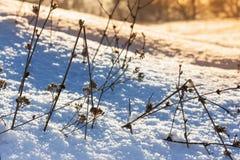 Plants under snow Royalty Free Stock Photos