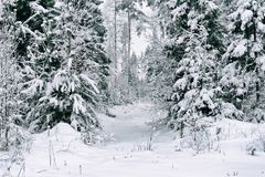 Plants under the snow in winter forest Royalty Free Stock Photo