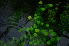 Plants under water Royalty Free Stock Photography