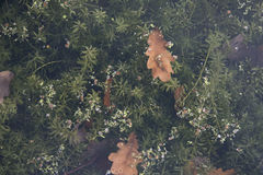 Plants underwater with leaves floating on the top Royalty Free Stock Photography