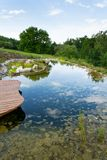 Plants used at natural swimming pond for purifying water. Natural swimming pond or natural swimming pool - NSP - purifying water without chemicals through royalty free stock image