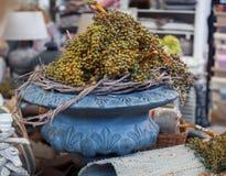 Plants in vase in brokante shop Royalty Free Stock Image