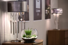 Plants in vase Stock Photos