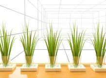 Plants in vases Stock Photos