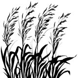 Plants (vector) Stock Images