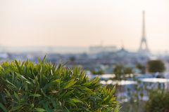 Plants and vegetation on a terrace with the Eiffel tower in a bl. Urry background, Paris, France Royalty Free Stock Photo
