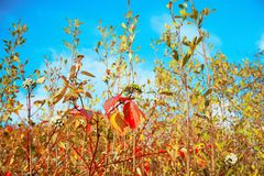 Plants. View of the beautiful autumn plants Royalty Free Stock Photos