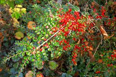 Plants. View of the beautiful autumn plants Royalty Free Stock Images