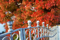 Plants. View of the beautiful autumn plants Royalty Free Stock Photo