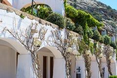 Plants on the wall. In Poltu Quatu, Sardinia Stock Photo
