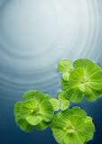 Plants on water Royalty Free Stock Images
