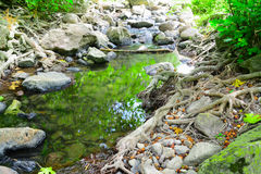 Plants and water in a green forest in Sardinia Stock Photography