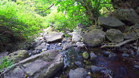 Plants and water in a green forest Stock Images