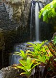 Plants and waterfall Stock Images