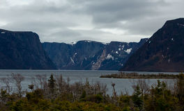 Plants, Waters, and Mountains in Newfoundland Canada Stock Photos