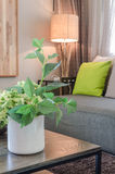 Plants in white ceramic vase in living room Royalty Free Stock Images