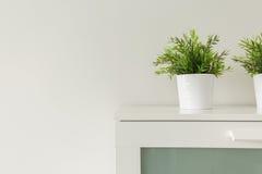 Plants in white pots Stock Photos
