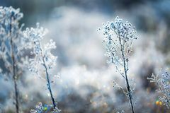 Plants with white rime Royalty Free Stock Image