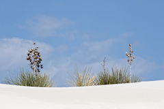 Plants on white sand Royalty Free Stock Photo