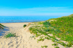 Plants and white sand in Rena Majore beach Royalty Free Stock Images