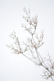Plants in winter Stock Photos