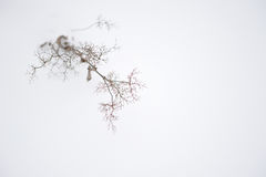 Plants in winter Stock Images