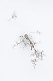 Plants in winter Royalty Free Stock Photo