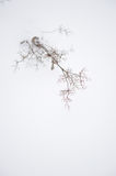 Plants in winter Royalty Free Stock Photos