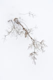 Plants in winter Royalty Free Stock Photography